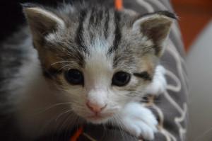 chaton 1