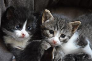 chaton 1 et 2