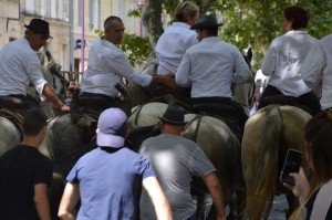 DSC_0429-Cherchez le taureau...